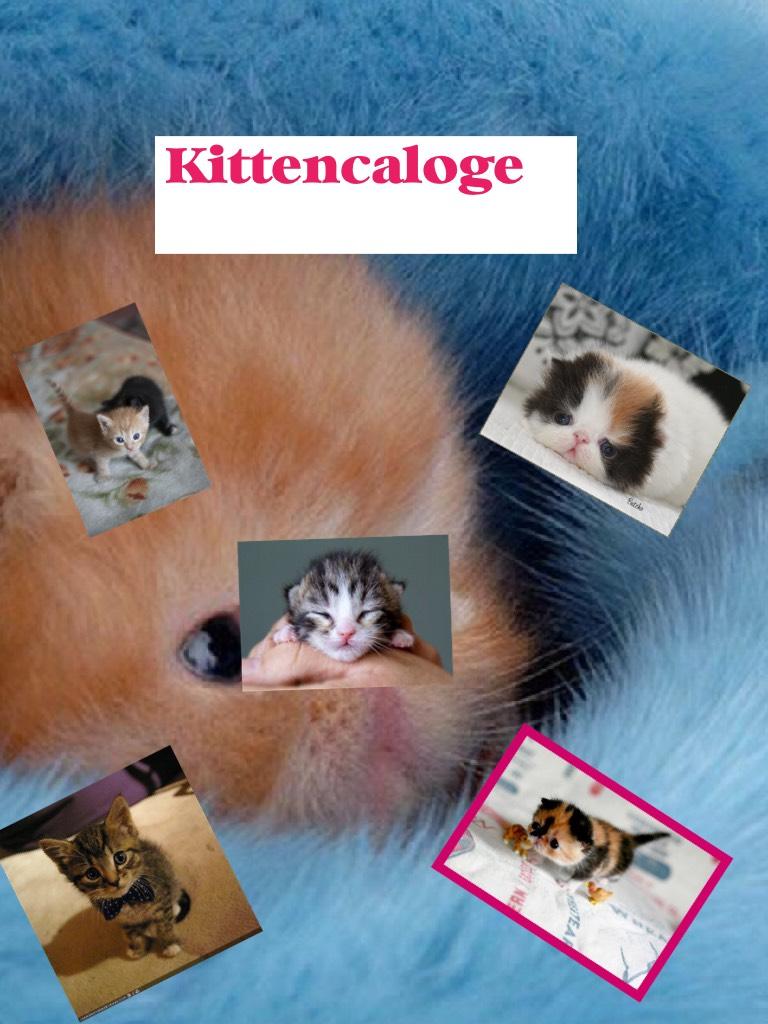 Kittencaloge Soooooo cut