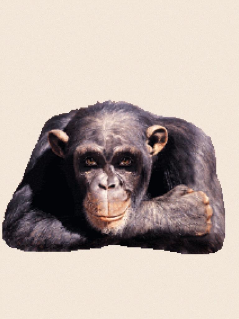 Живые открытки обезьяны, новым