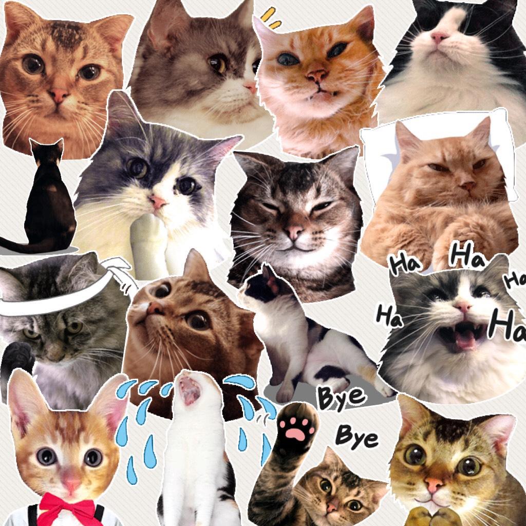 Cat gifs 😻😂😻😂😻😂😻😂😻😂