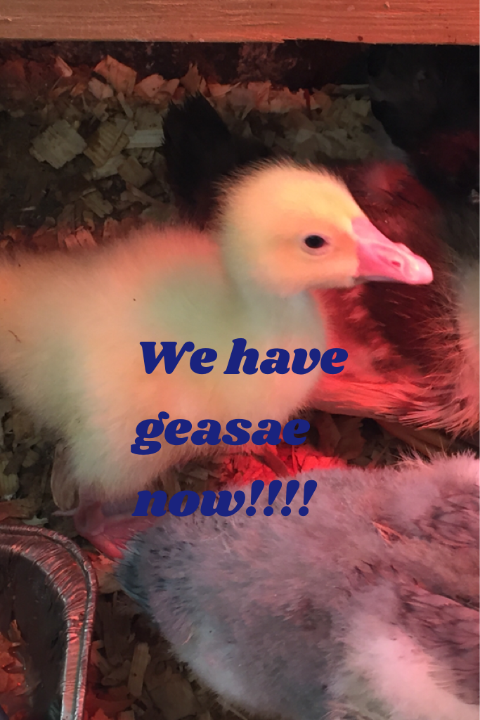 We have geasae now!!!!