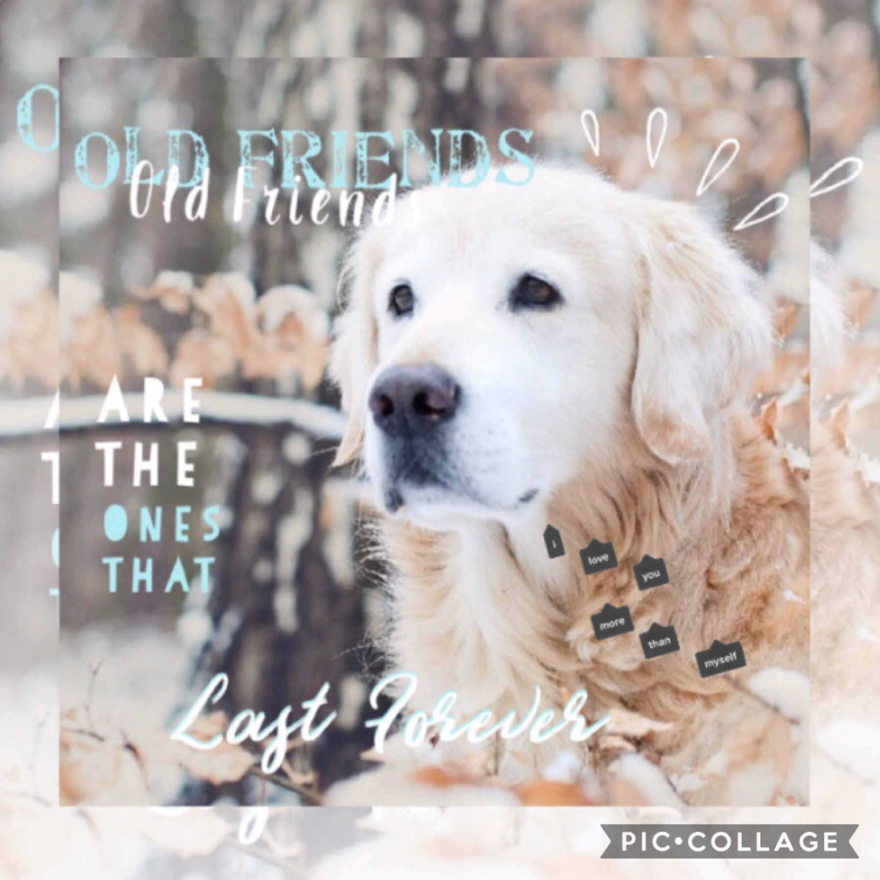 🐕 Tap 🐕  I think this one has a good quote. What do you guys think? Rate out of ten.