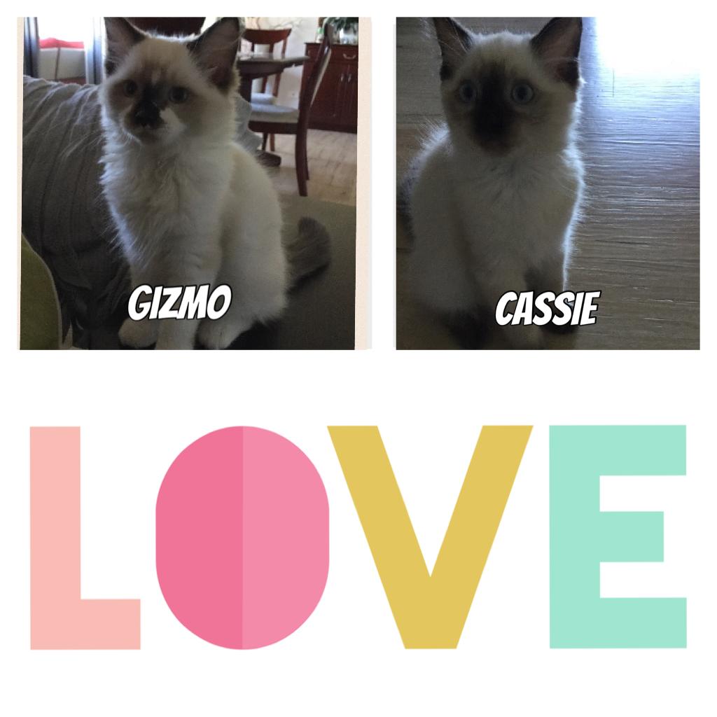 Love my cats