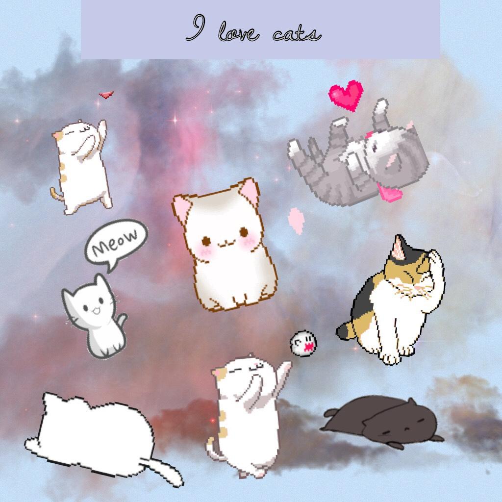 I love 🐈
