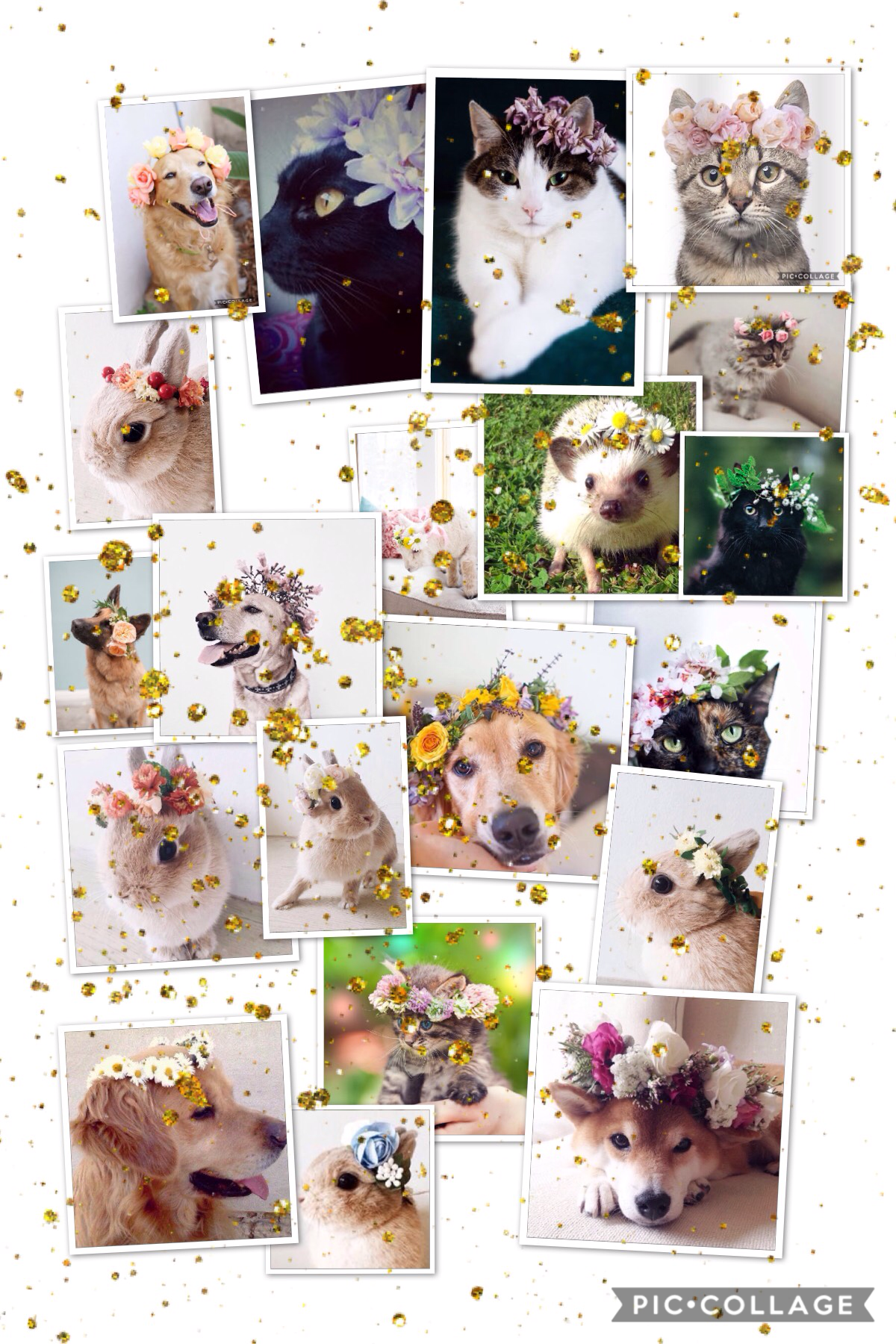 Go follow flowercrowns-on-animals! The pics that are posted are gorgeous! These are just a few of them! FYI, I will have a contest on my extras page... be sure to join when it comes out!