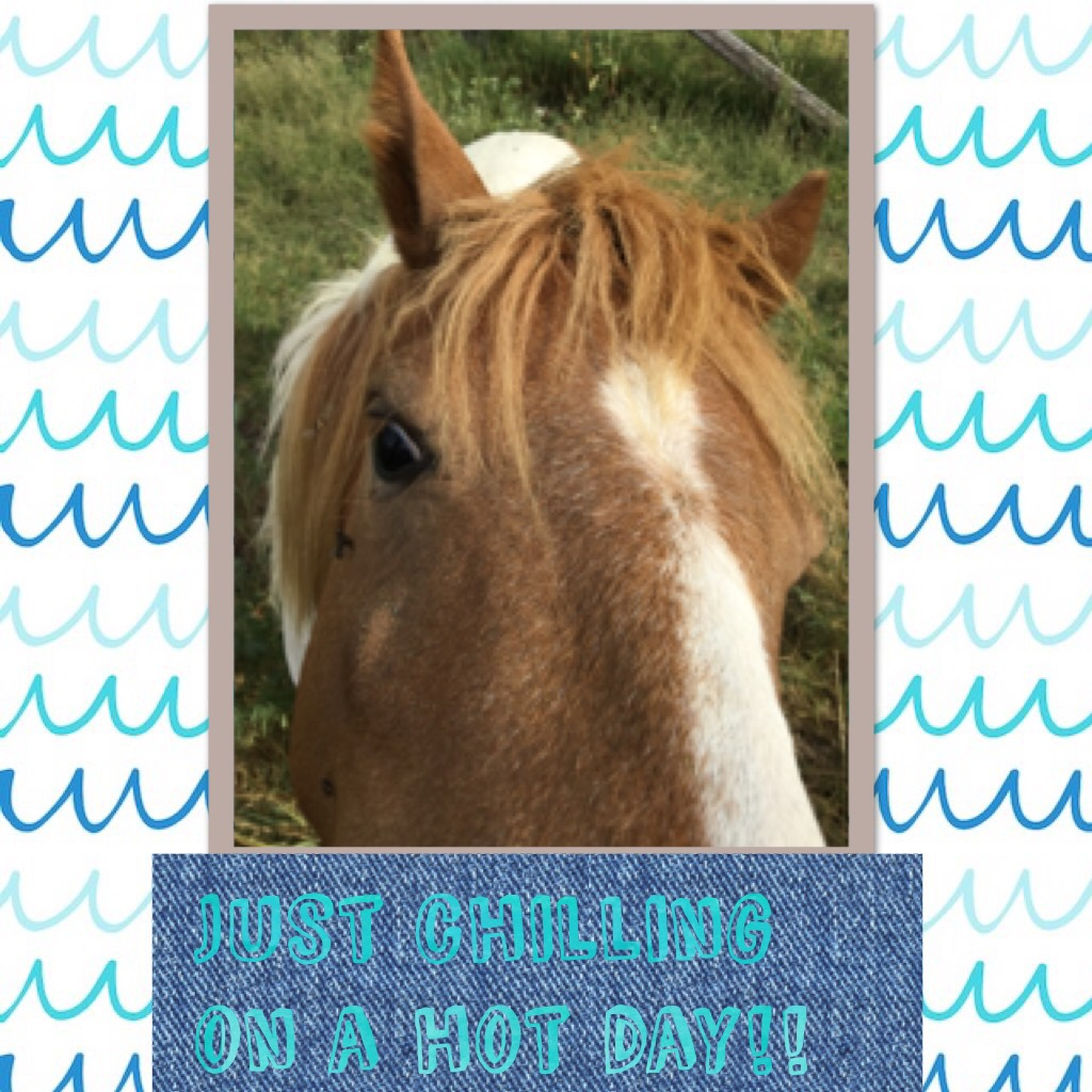 Just chilling on a hot day!! # ponies rock!