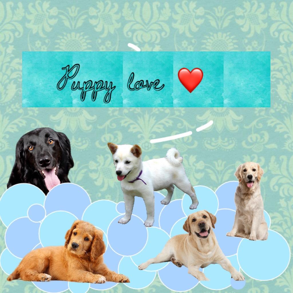 Puppy love ❤️