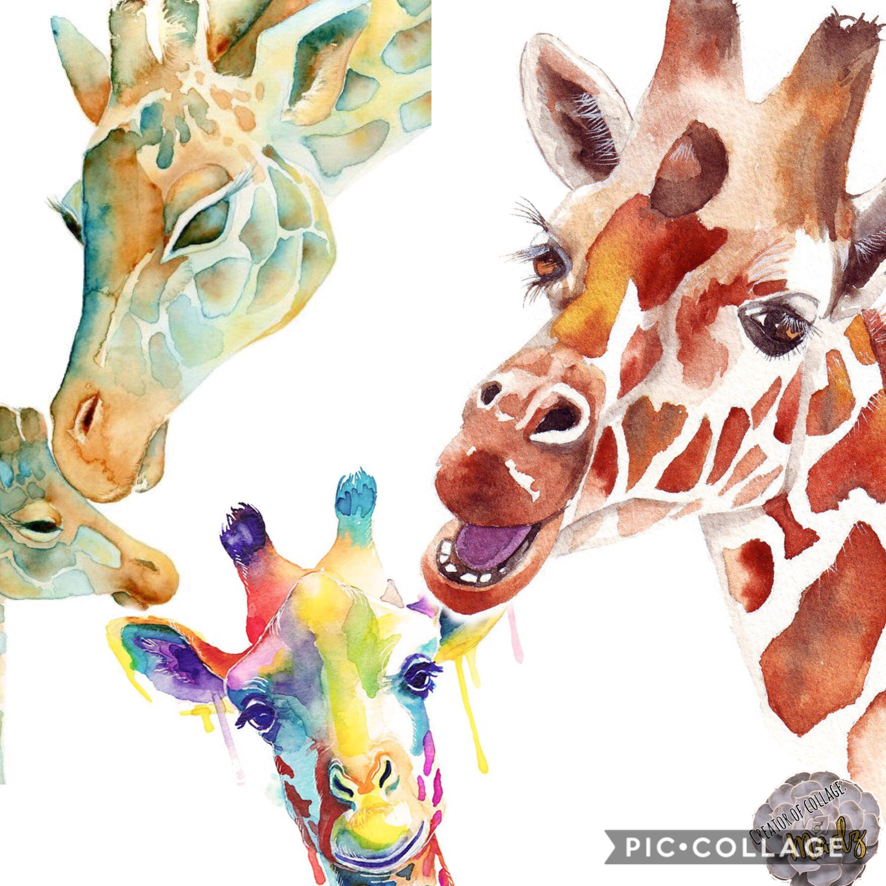 Comment your fave animal/s. One of my fave is giraffe. Bye #madzfam