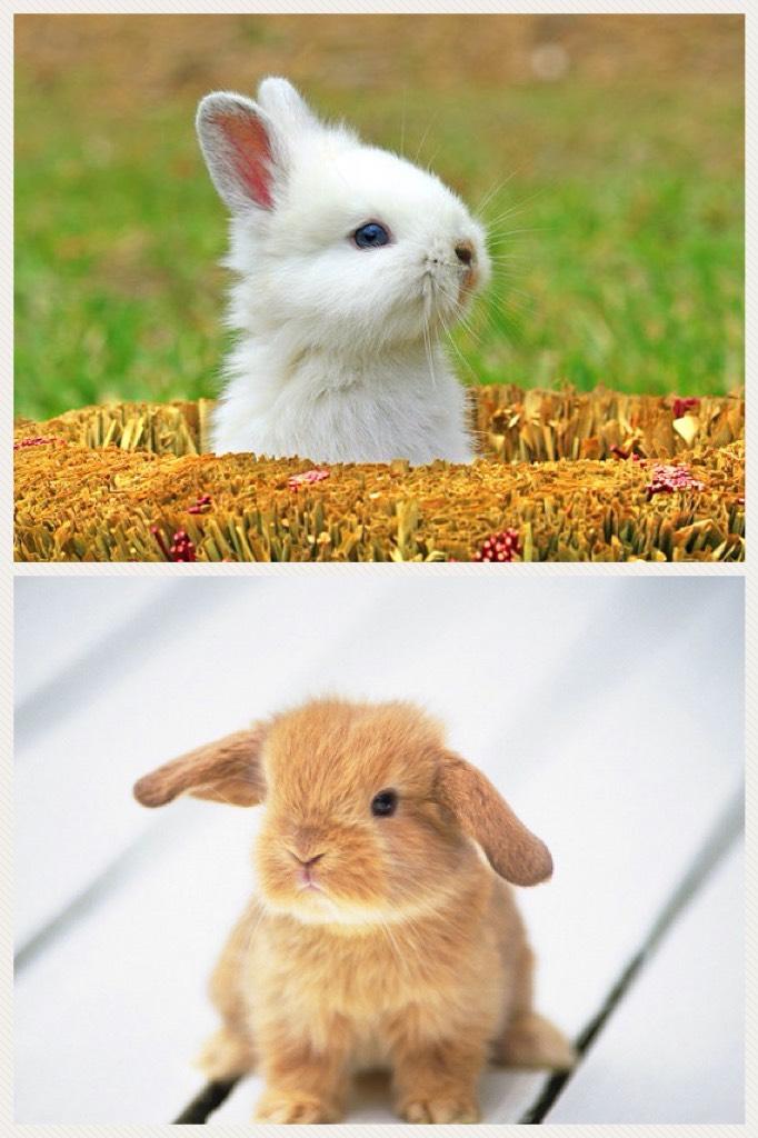 Cute bunnies!😍😍