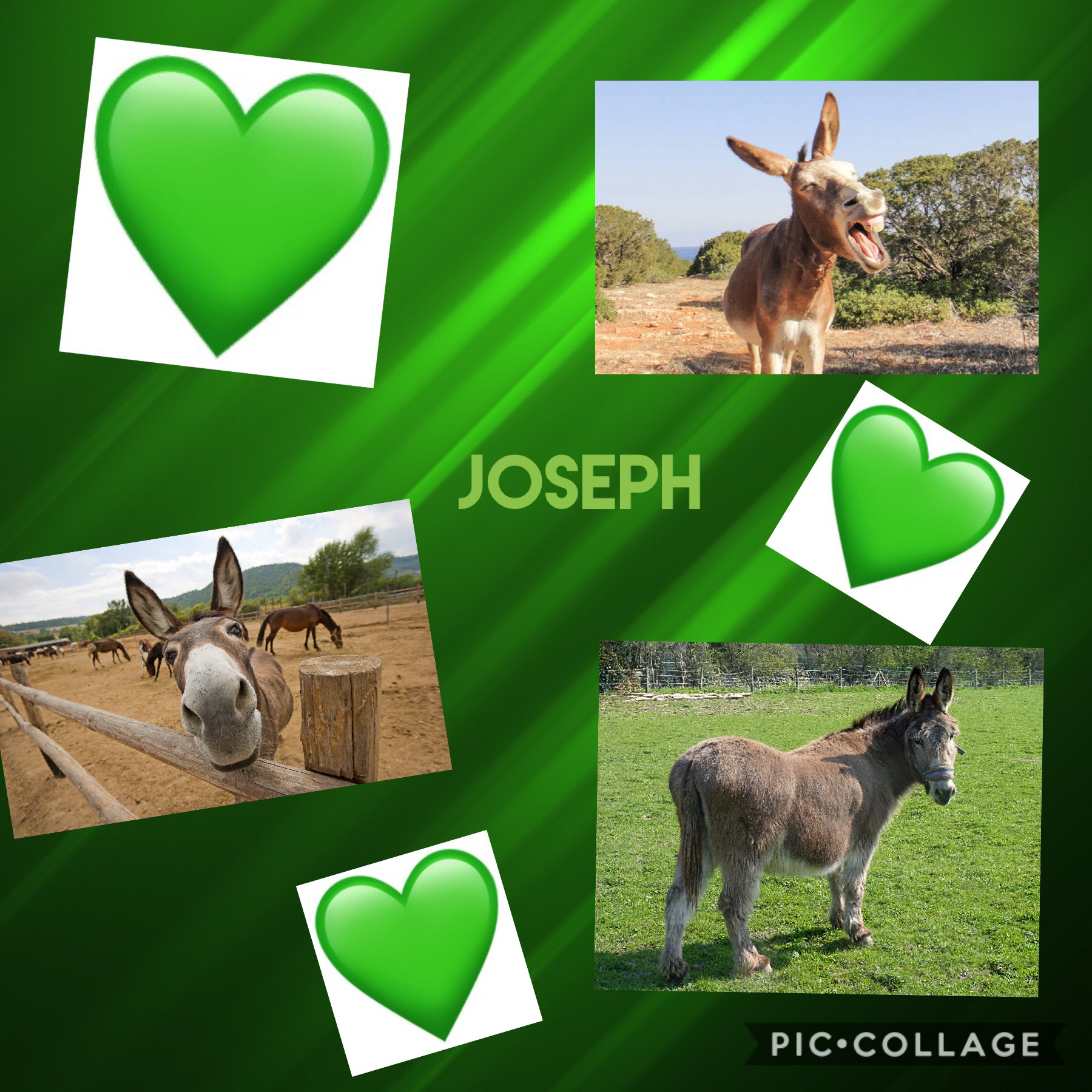 Joseph for the Win!💚💚
