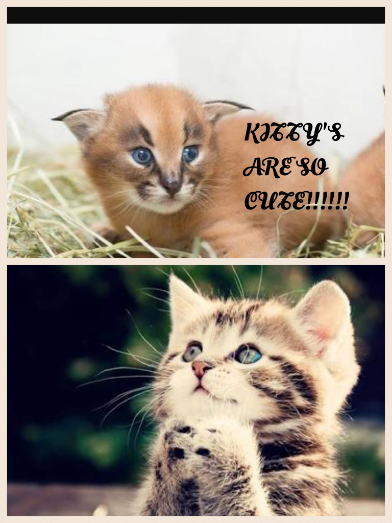 KITTY'S ARE SO CUTE!!!!!!